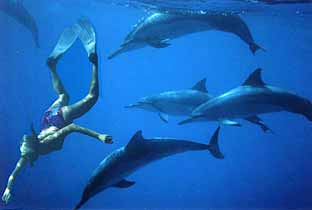 Essay about swimming with dolphins
